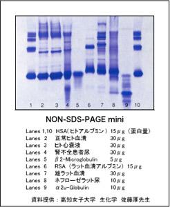 TEFCO:非変性タンパク質電気泳動用 NON-SDS-PAGE