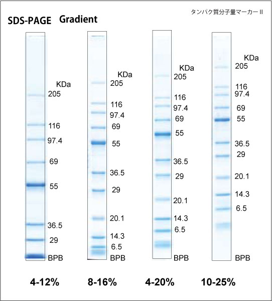 TEFCO|タンパク質分析用 SDS-PA...